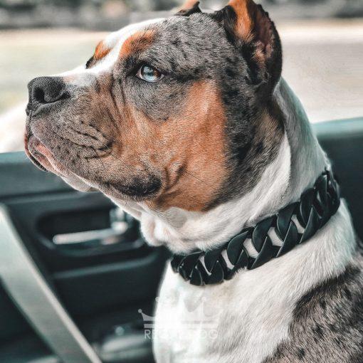 Merle Bully Matt Black Dog Chain
