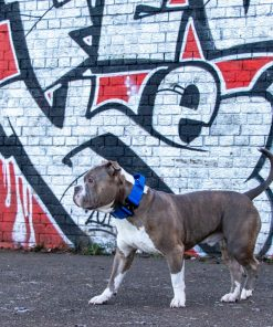 Blue Tactical Dog Collar with Handle