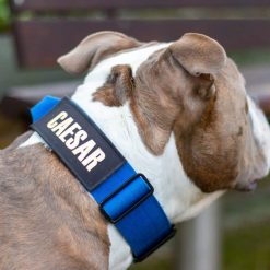 Tactical Nylon Blue Dog Collar