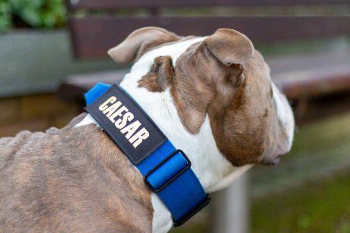Tactical Nylon Blue Dog Collar