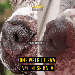 Paw & Nose Balm - Heal dry and cracked dog nose