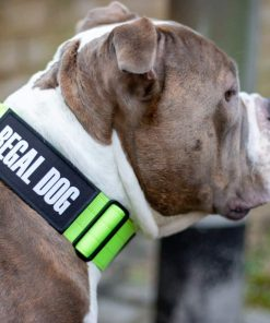 Tactical Nylon Green Dog Collar