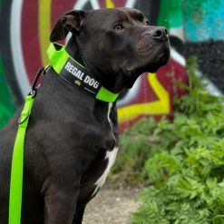 Green Tactical Dog Collar and Lead