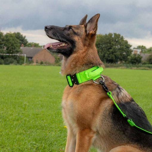 German Shepherd Green Tactical Dog Collar And Lead