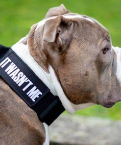 Tactical Nylon Black Dog Collar