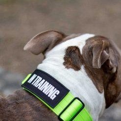 Tactical Nylon Green Dog Collar