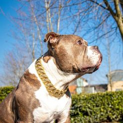 Pocket American Bully Diamond Gold Chain
