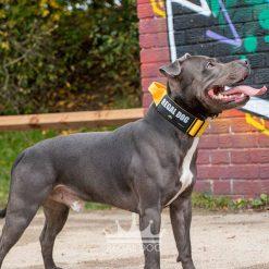Blue Staffy Yellow Tactical Dog Collar