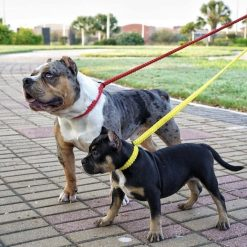 Red and Yellow Paracord Slip Leads American Bully