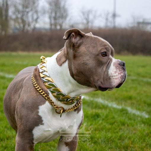 Gold and Silver Dog Chain with Monaco Gold Necklace