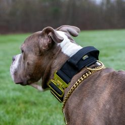 Black Gold Tactical Dog Collar American Bully
