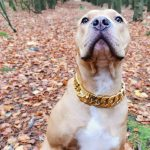 Gold Chain Dog Collar photo review