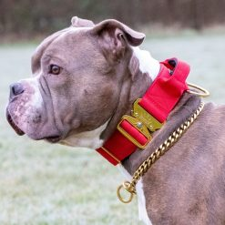 Red - Gold Series Tactical Dog Collar American Bully
