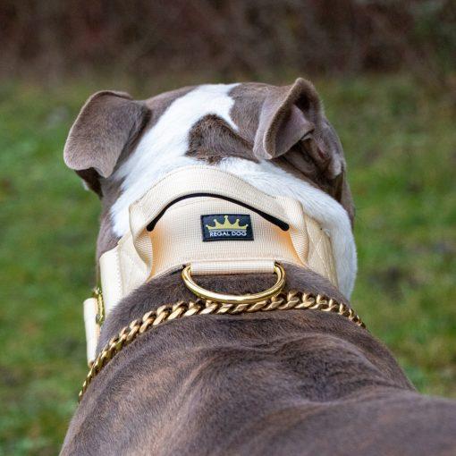 Cream - Gold Series Tactical Dog Collar American Bully