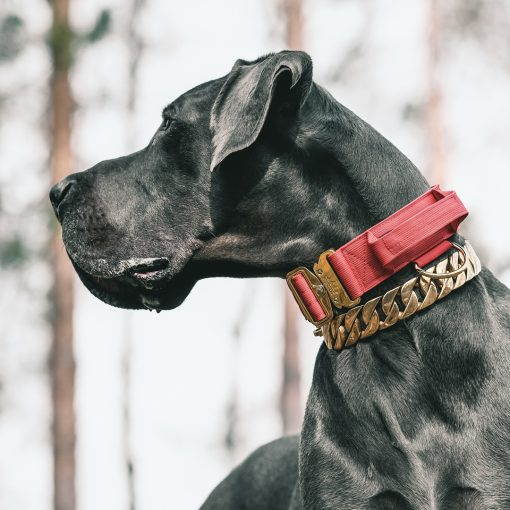 Red Gold Series Dog Collar and Gold Dog Chain