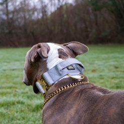 Grey - Gold Series Tactical Dog Collar American Bully