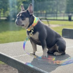 Prism Iridescent Dog collar and lead