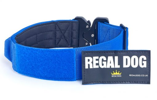 Blue Tactical Dog Collar with patch