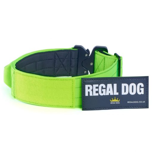 Green Tactical Dog Collar with patch