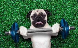 Building dog muscle