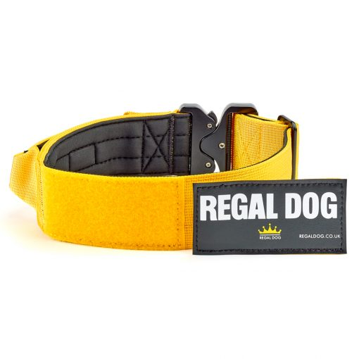 Burnt Orange Tactical Dog Collar with patch