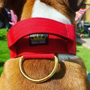 Red Gold Series Dog Collar