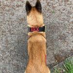 Personalised Black Gold Series Dog Collar