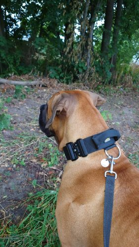 Black dog collar